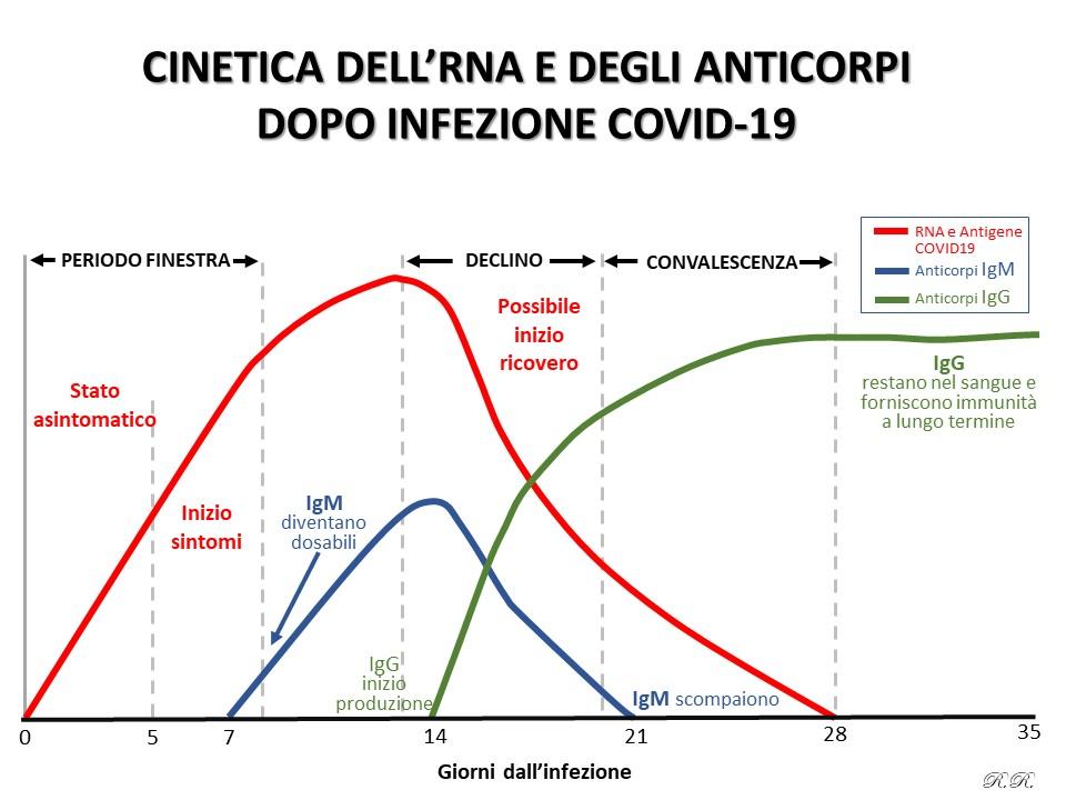 Cinetica delle immunoglobuline COVID19